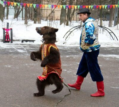 8 (916) 702 – 11 – 08 медведь-артист