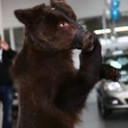 медведь  с цыганами
