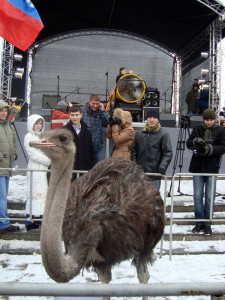 8 (916) 702–11–08 аренда страуса