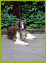 8 (916) 702–11–08 фотосъемка собак