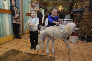 8 (916) 702 – 11 – 08 шоу собак