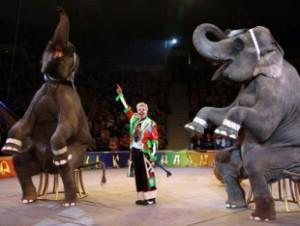 8 (916) 702–11–08 Слон в Москве
