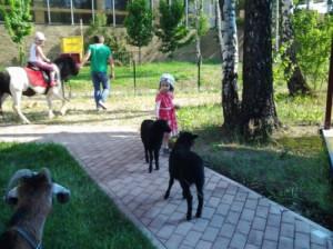 8 (916) 702–11–08 Московский контактный зоопарк