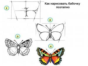 8 (916) 702–11–08     как рисовать бабочку