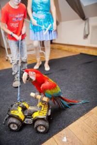 8 (916) 702 – 11 – 08 шоу птиц на мероприятие